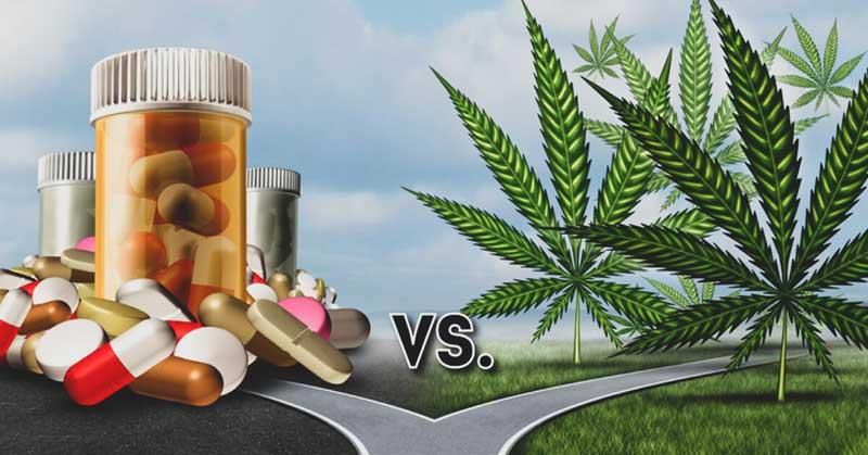 CBD-vs-Supplements