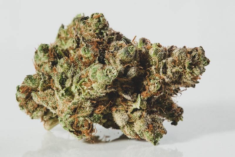 Crasher-Cannabis-Strain