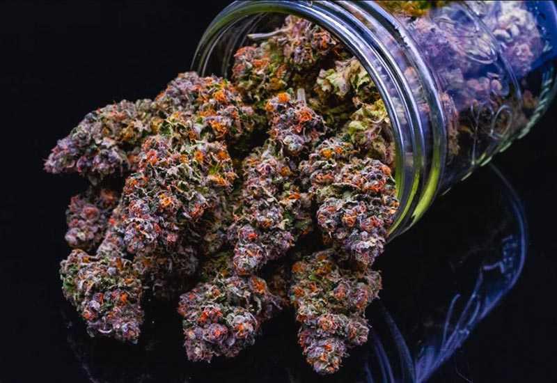 Gelato-Cannabis-Strains