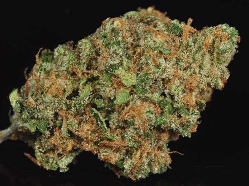 Trainwreck-Marijuana-Strains