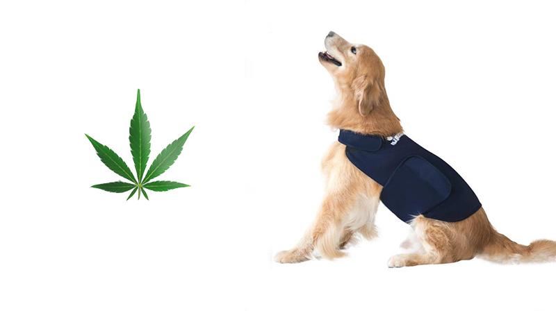 CBD dog treats for anxiety How CBD Can Help