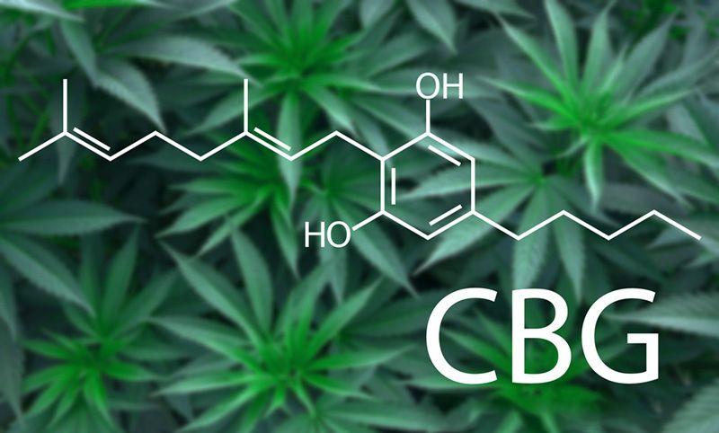 Marijuana cannabis plant