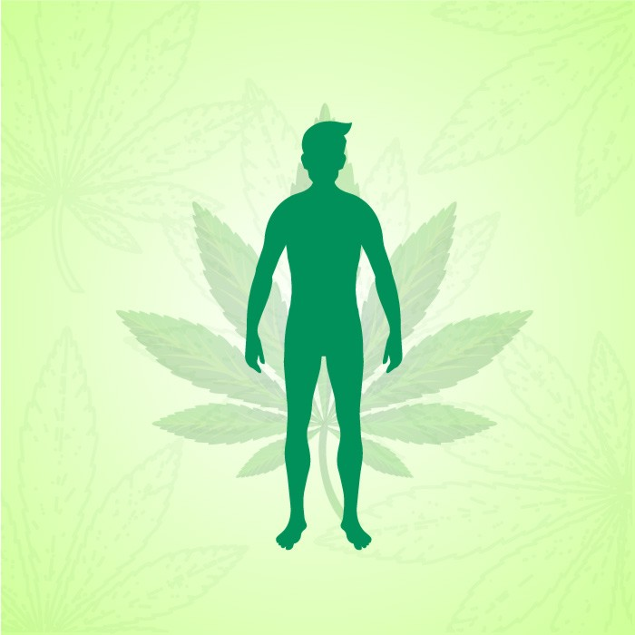Endocannabinoid System and Its Functions