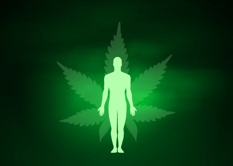 Marijuana Affects Your Mind and Body