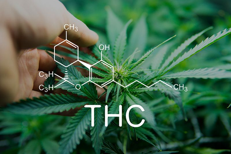 THC? Everything You Need to Know
