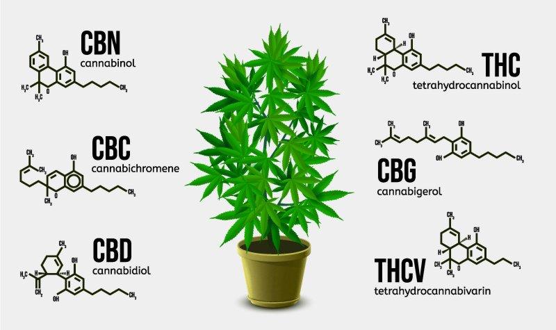 Phytocannabinoids and Their Benefits