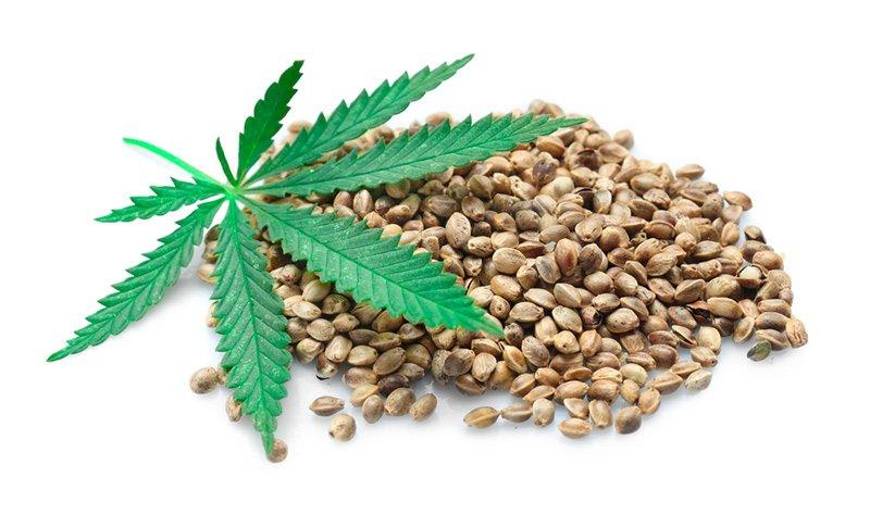 Hemp Seeds in Promoting Wellness